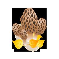Cueillette des champignons 2019