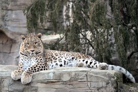 Les meilleurs zoos de Suisse - Parc animalier de Berne