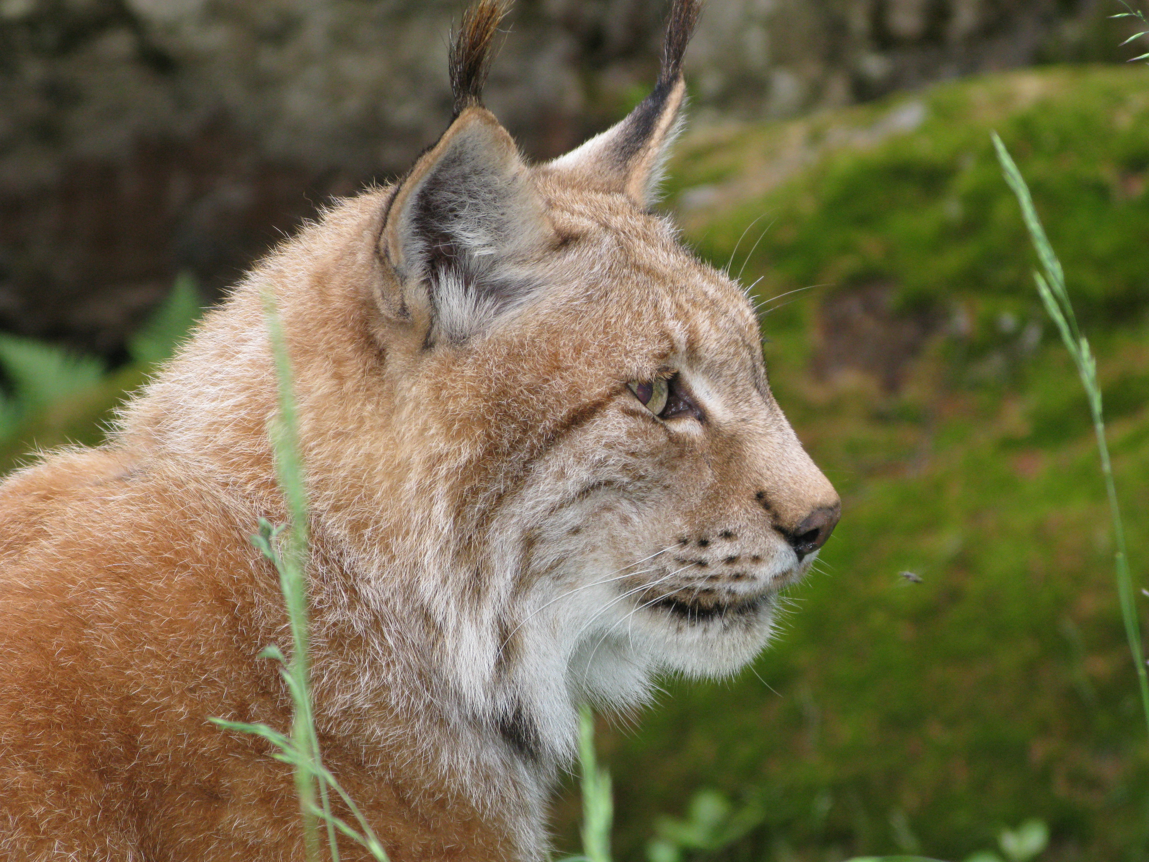 Les meilleurs zoos de Suisse - Zoo des Marécottes