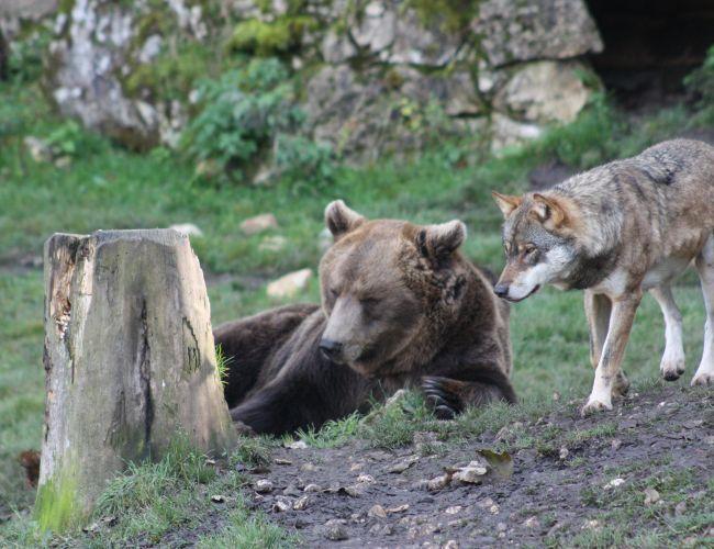 Les meilleurs zoos de Suisse - Juraparc à Vallorbe