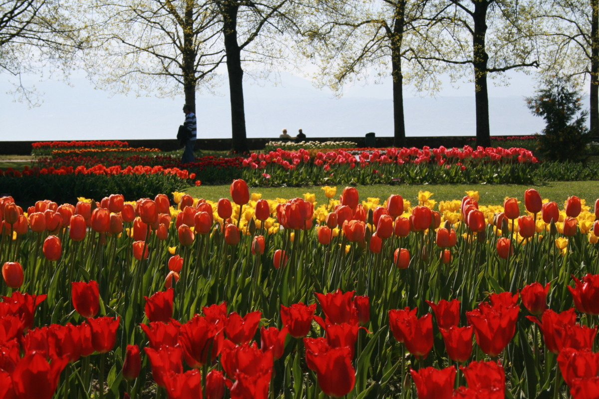 Tulpenfest Morges