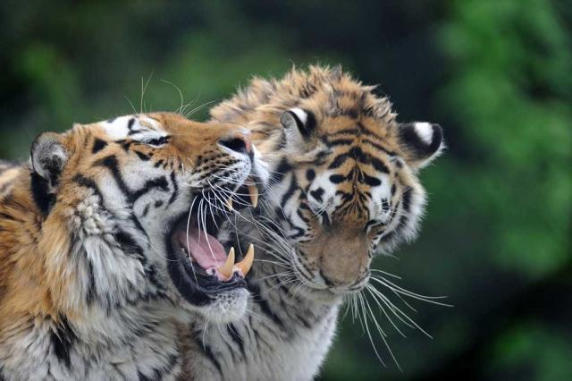 Les meilleurs zoos de Suisse - Zoo de Servion