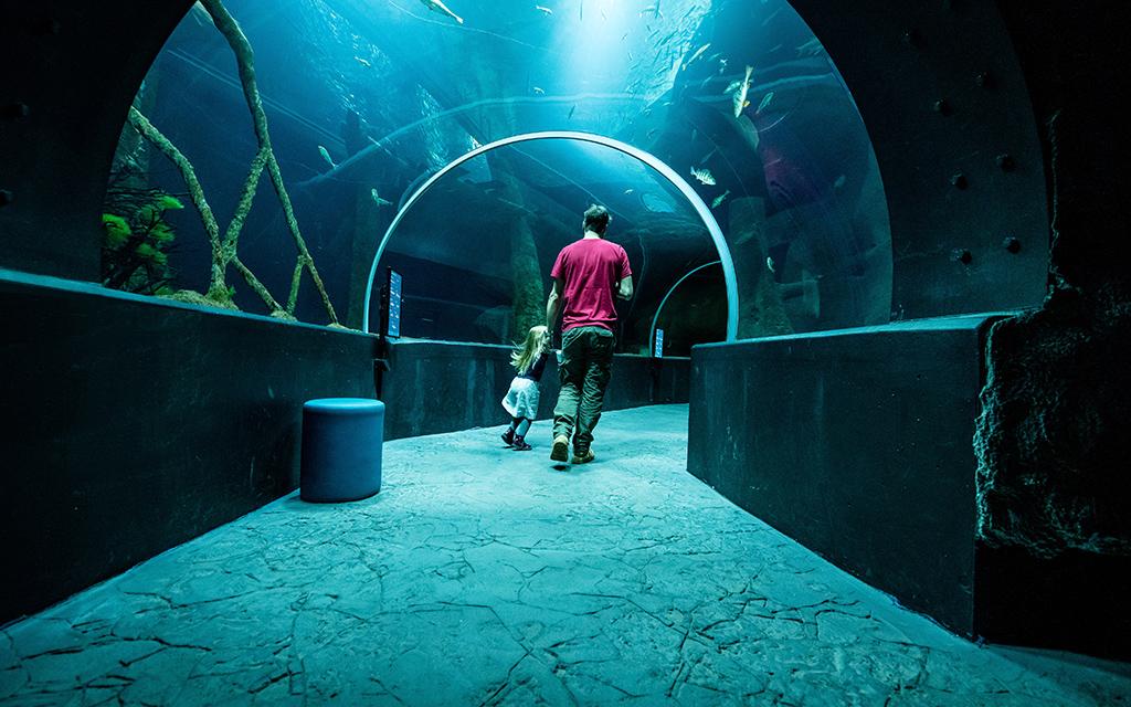 Les meilleurs zoo de Suisse - Aquatis à Lausanne