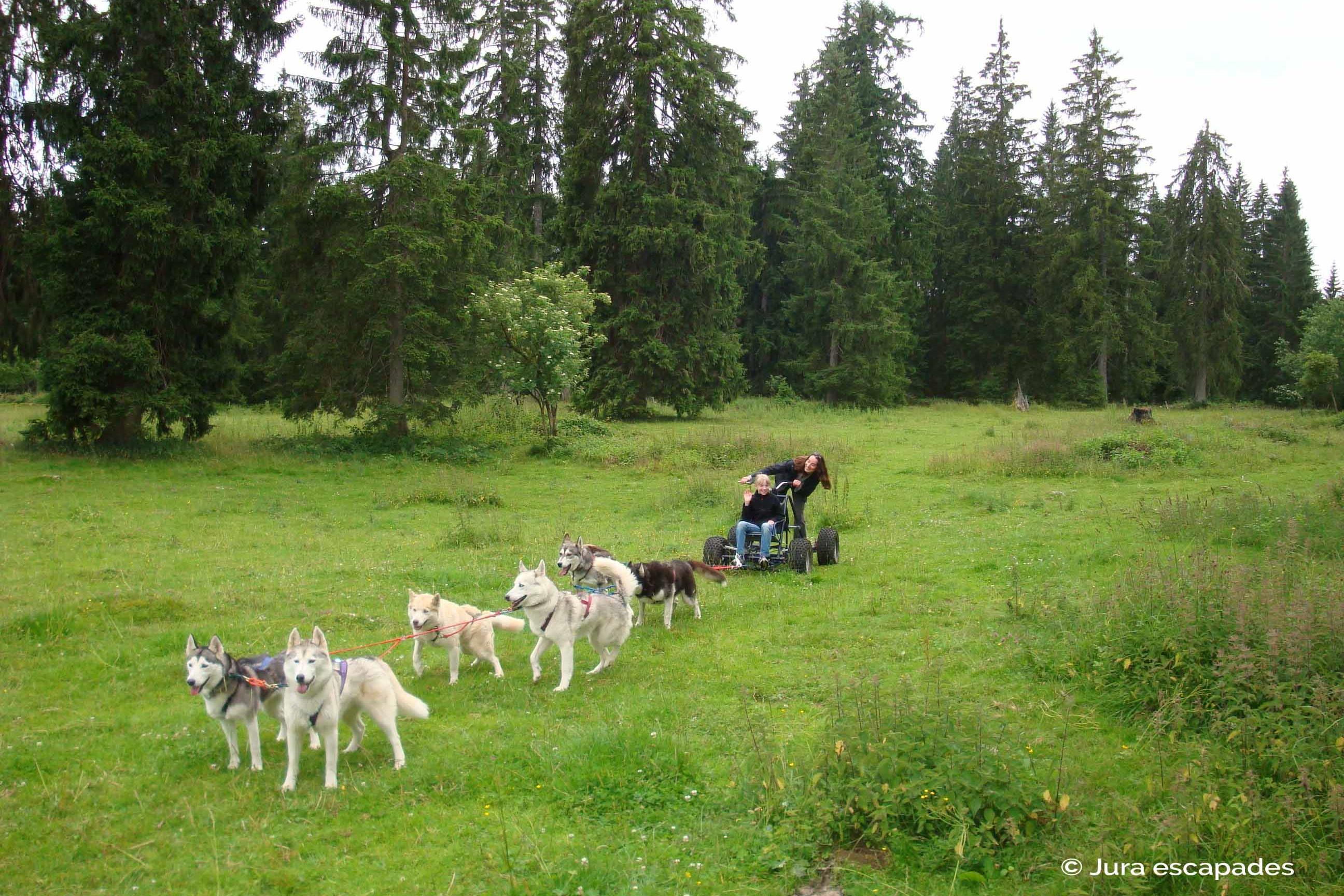 Balades insolites avec des animaux étonnants - Sortie avec des huskies avec Jura Escapades