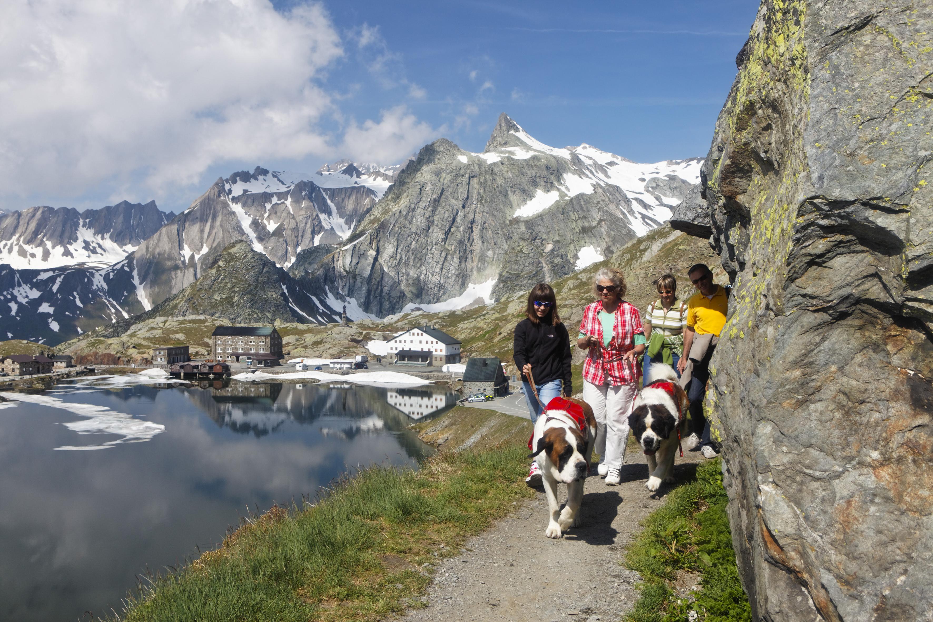 Balades insolites avec des animaux étonnants - Balade avec les chiens du Saint-Bernard en Valais