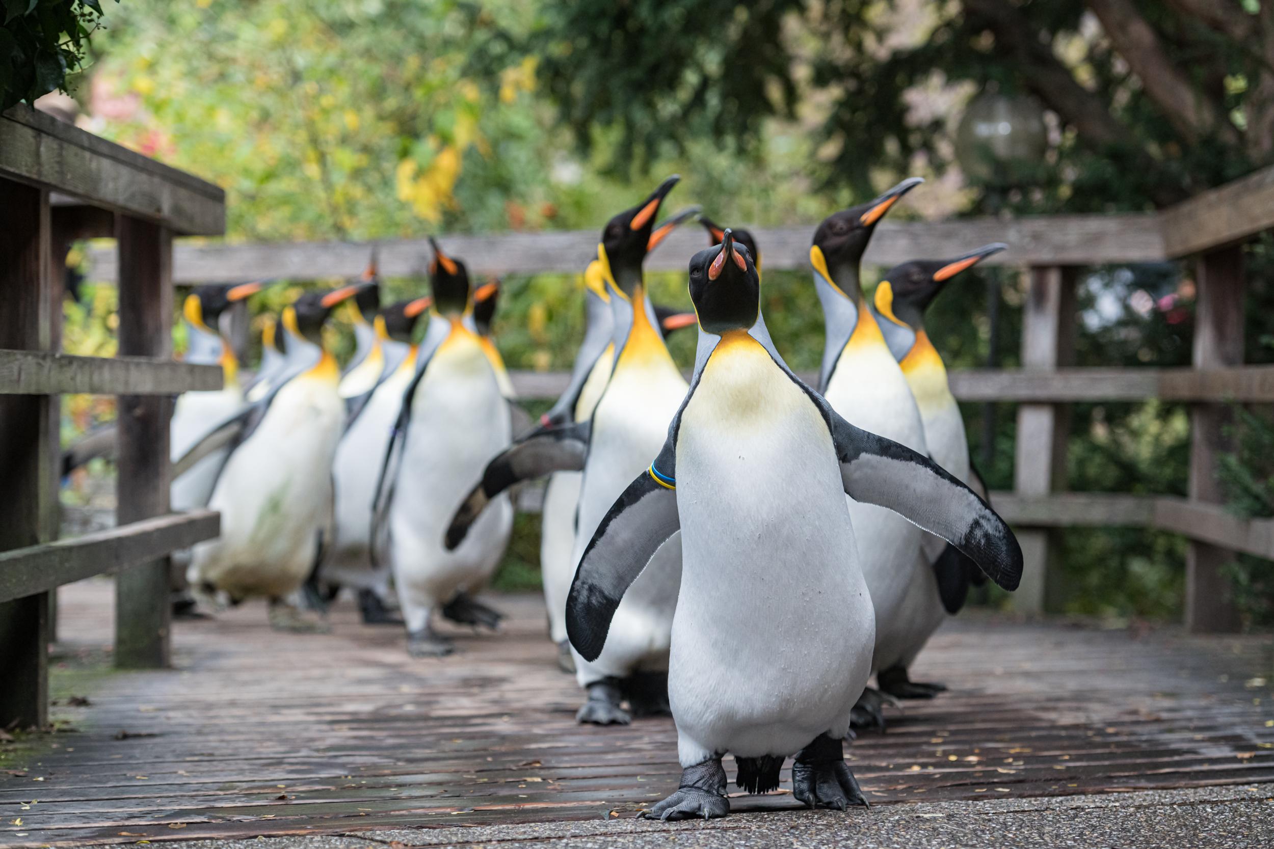Les meilleurs zoos de Suisse - Zoo de Bâle