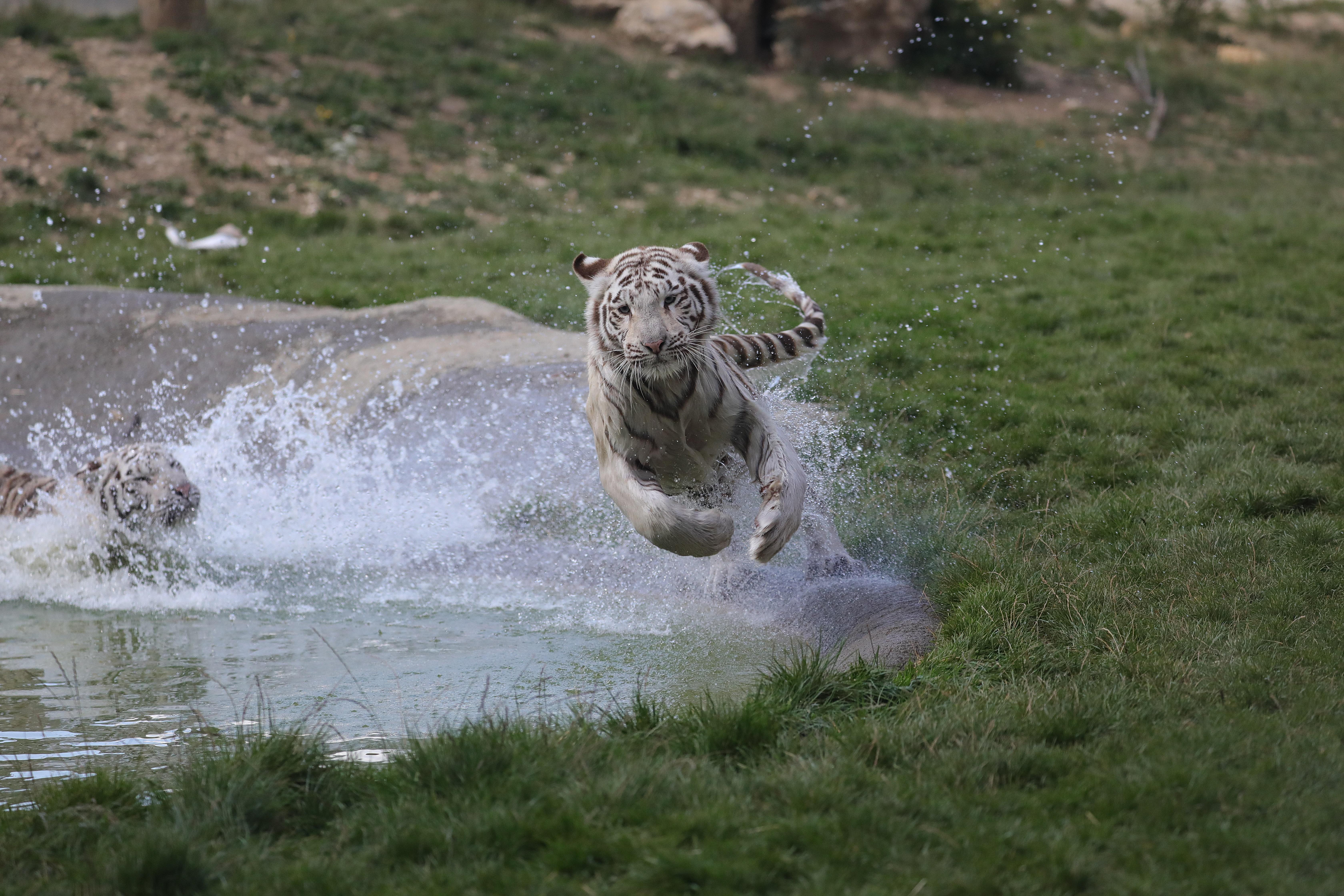 Les meilleurs zoos de Suisse - Sikypark à Crémines dans le Jura bernois