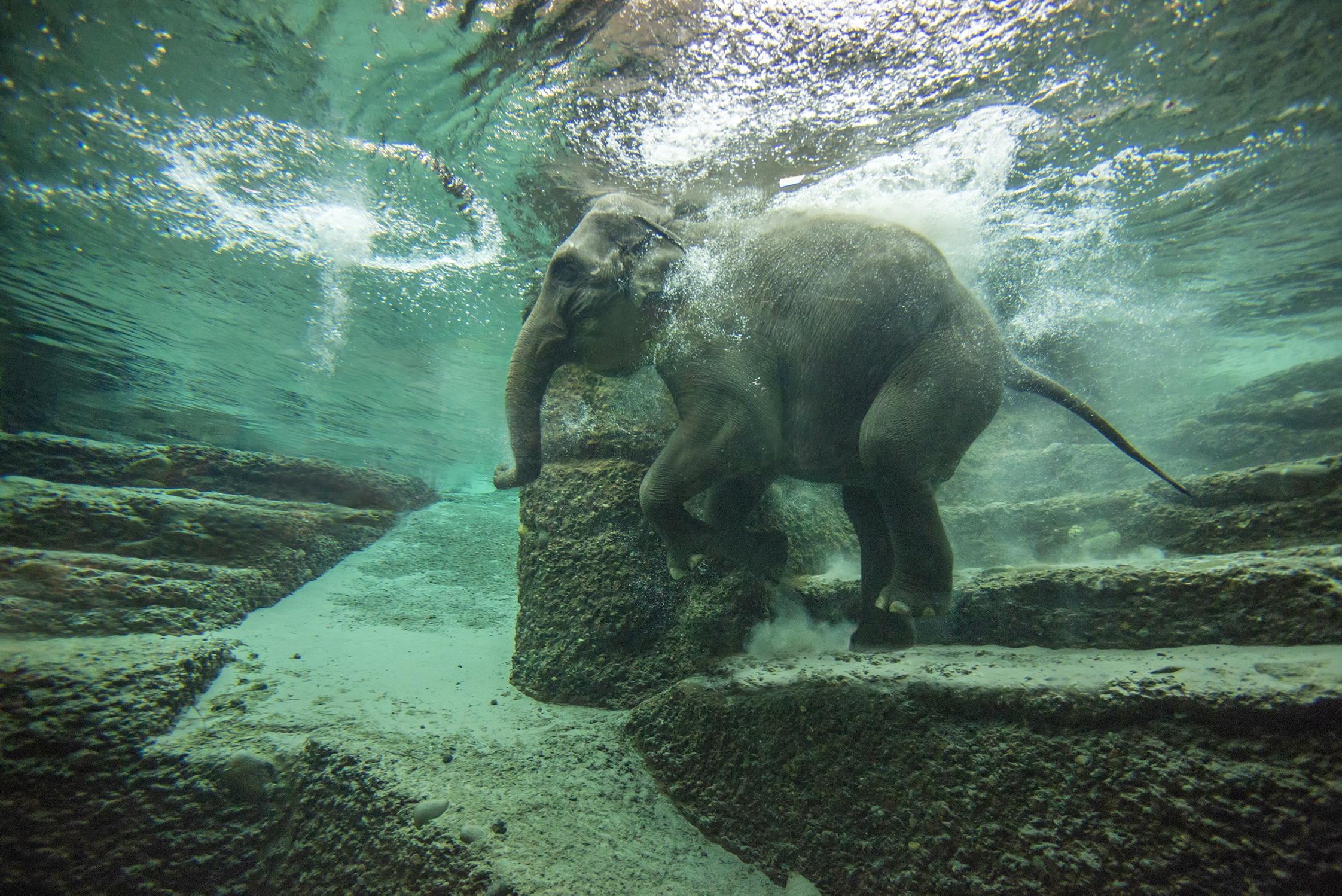 Les meilleurs zoos de Suisse - Zoo de Zurich