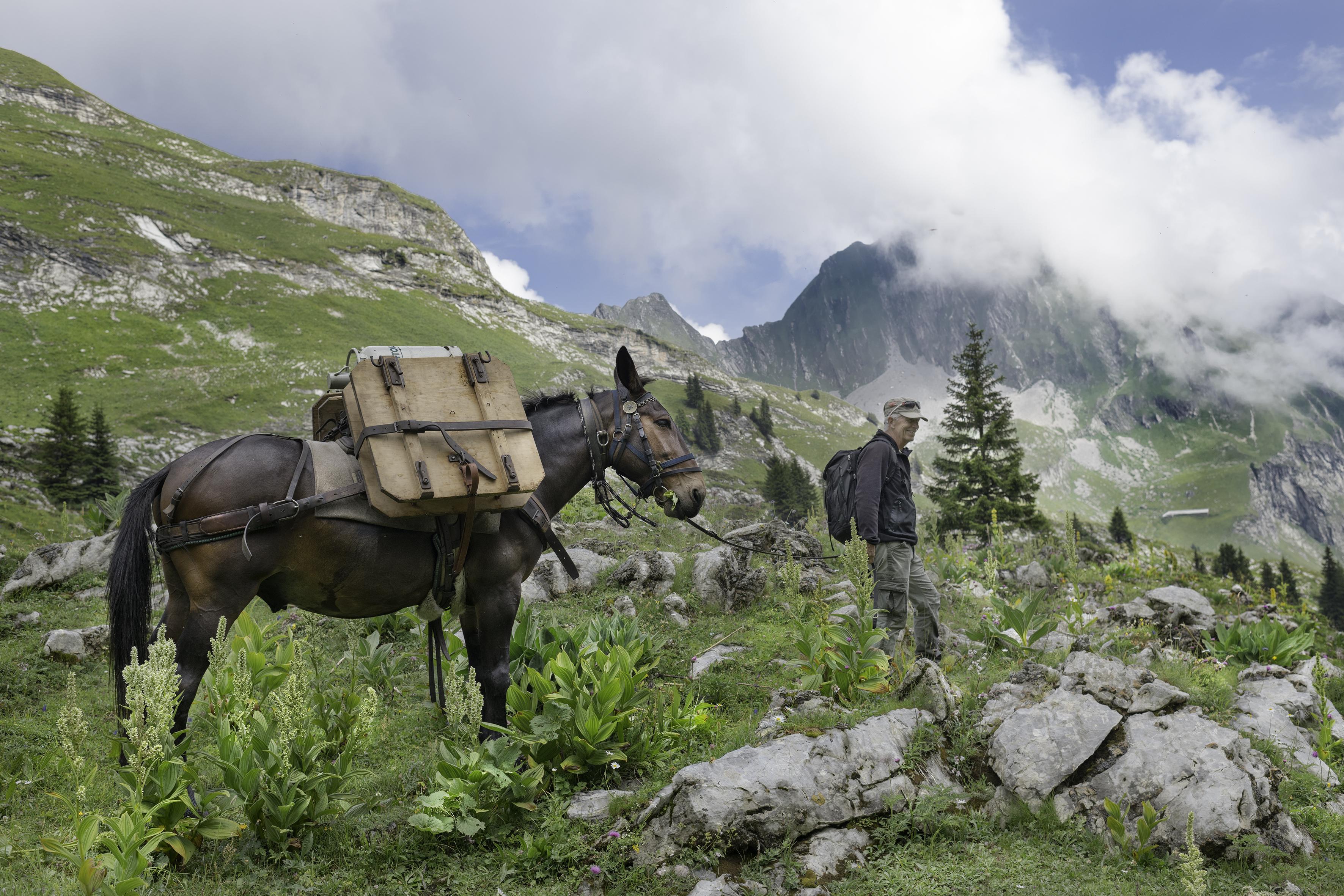 Balades insolites avec des animaux étonnants - Barlatâ ou le transport de fromage à dos de mulet au Vanil Noir