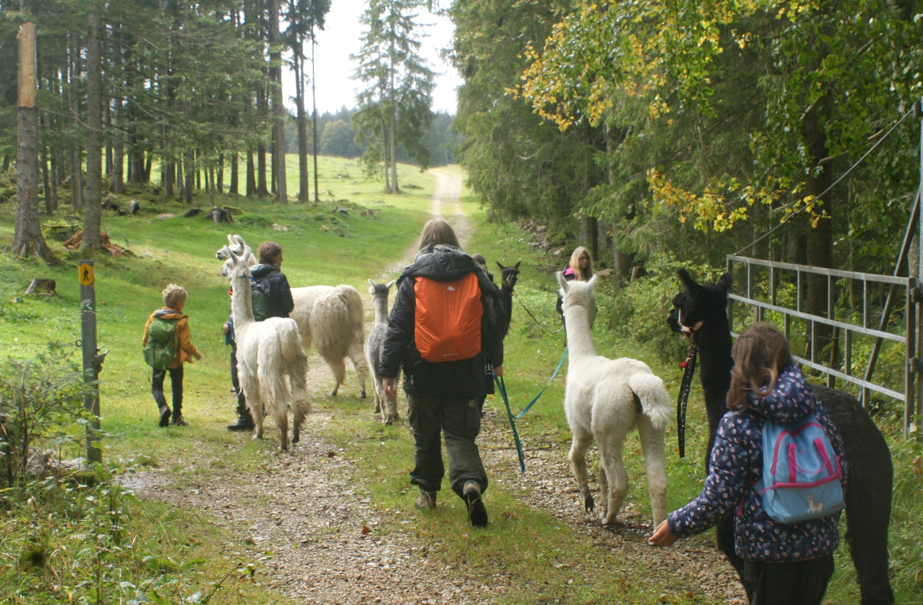 Balades insolites avec des animaux étonnants - Balade à dos de lama avec Lampaga à Romainmôtier