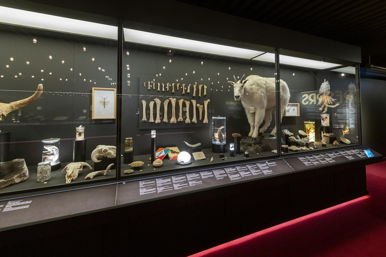 Naturhistorisches Museum Genf